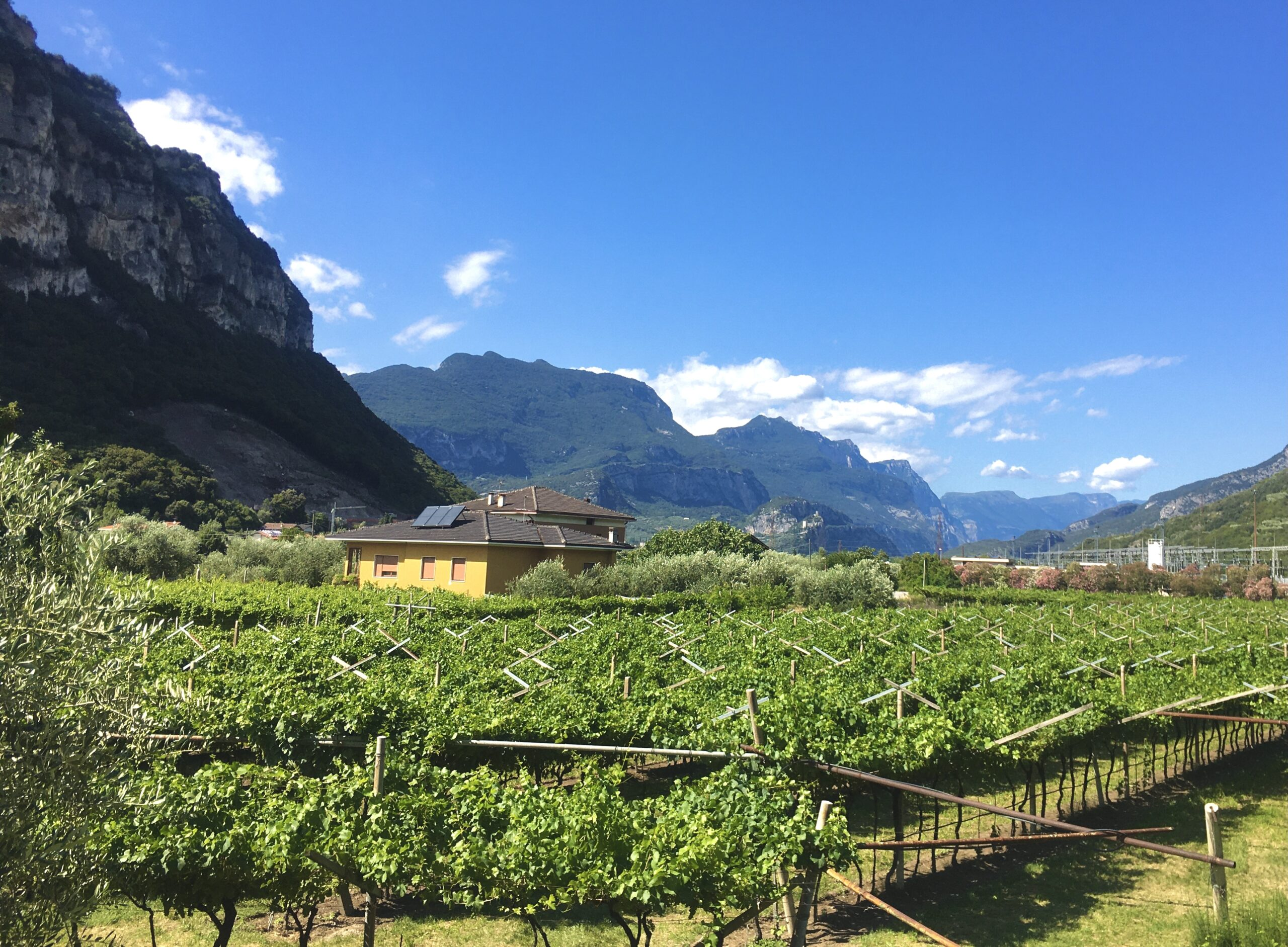 wycieczka do Arco winnice
